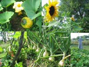 Summer scenes of the gardens