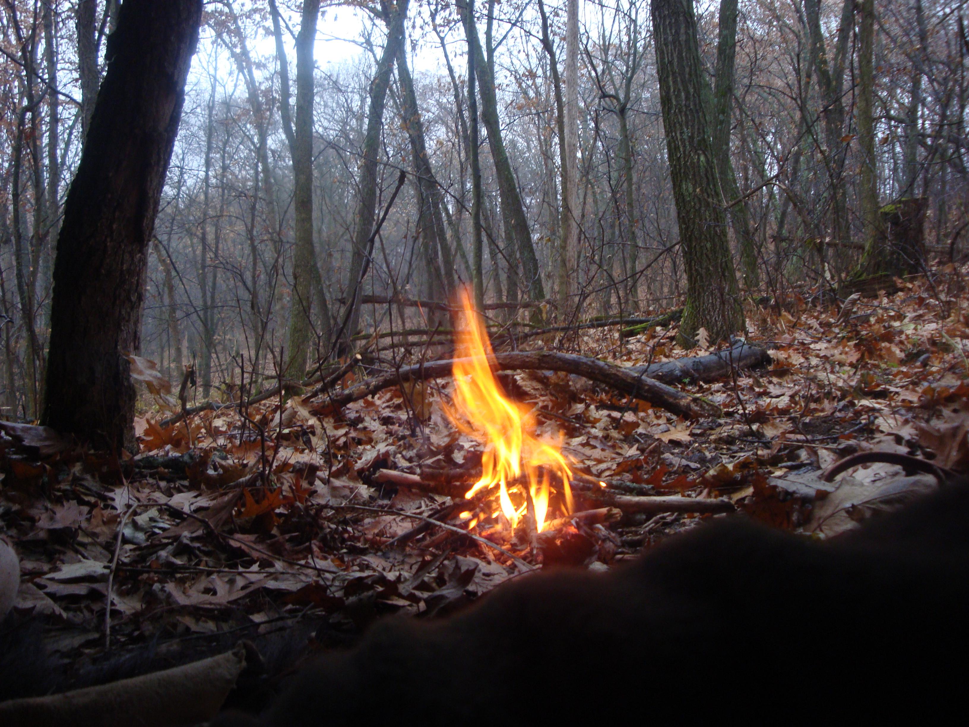 The Wet Woods