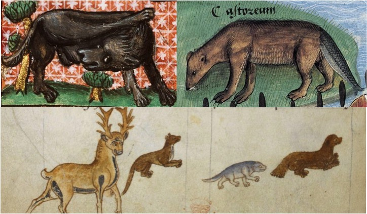 Beaver Hunting in the Middle Ages